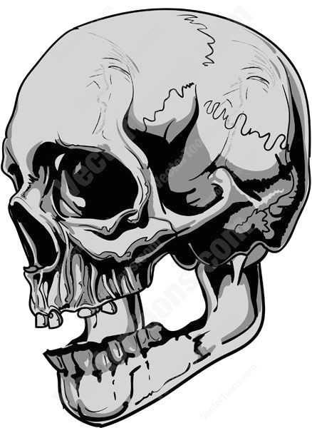 side view of gray human skull bone cranium evil grey head horror human mandible metal pdf sheen skeleton skull spooky tattoo teeth