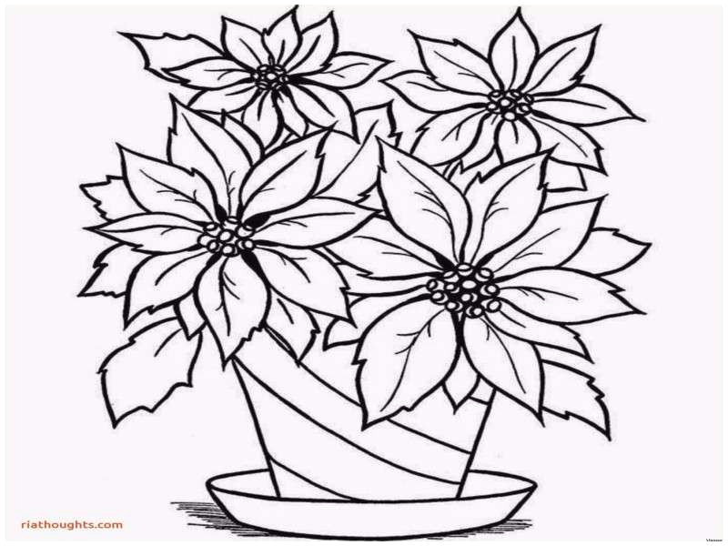3 ways to have a more appealing how to draw a flower