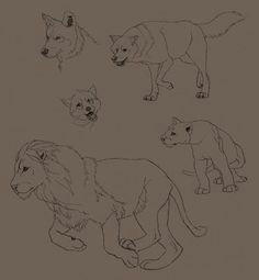 lion and wolf drawings wolf drawings easy drawings cartoon drawings animal drawings