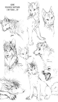 wolf drawings wolf sketches by tamberella on deviantart wolf drawings animal drawings pencil