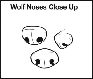 how to draw wolves step 4 here are some different types of noses that you may want to choose for your wolf drawing there is front view 3 4 view