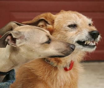 dog bites another dog thinkstock 160041861 jpg