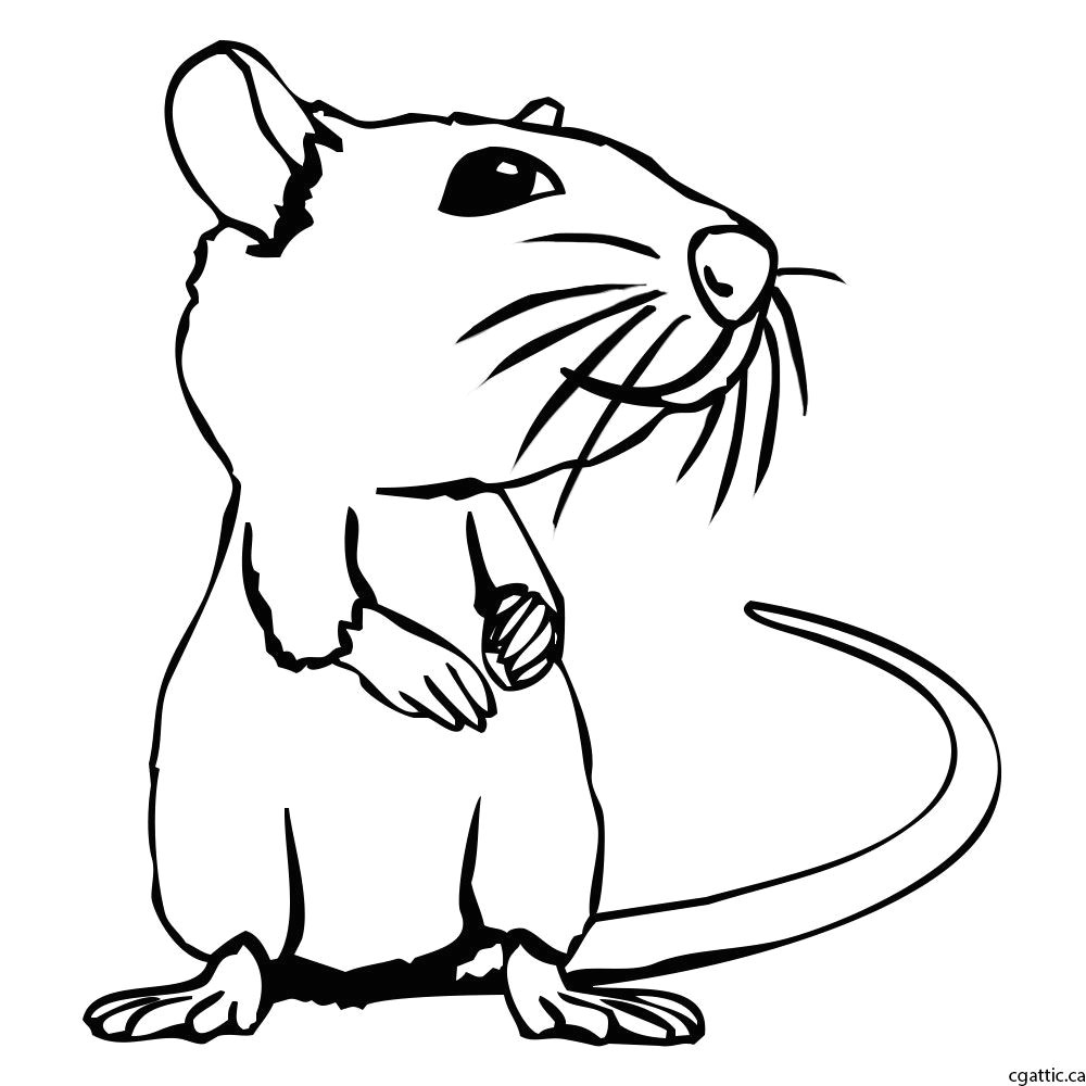 rat cartoon drawing step 2 trace over the initial sketch to form a tidy line drawing of an rat