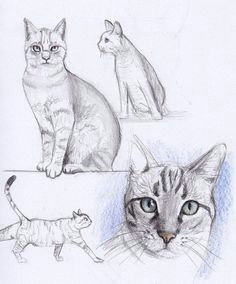 cat drawing draw tips animal sketches cute animal drawings art sketches