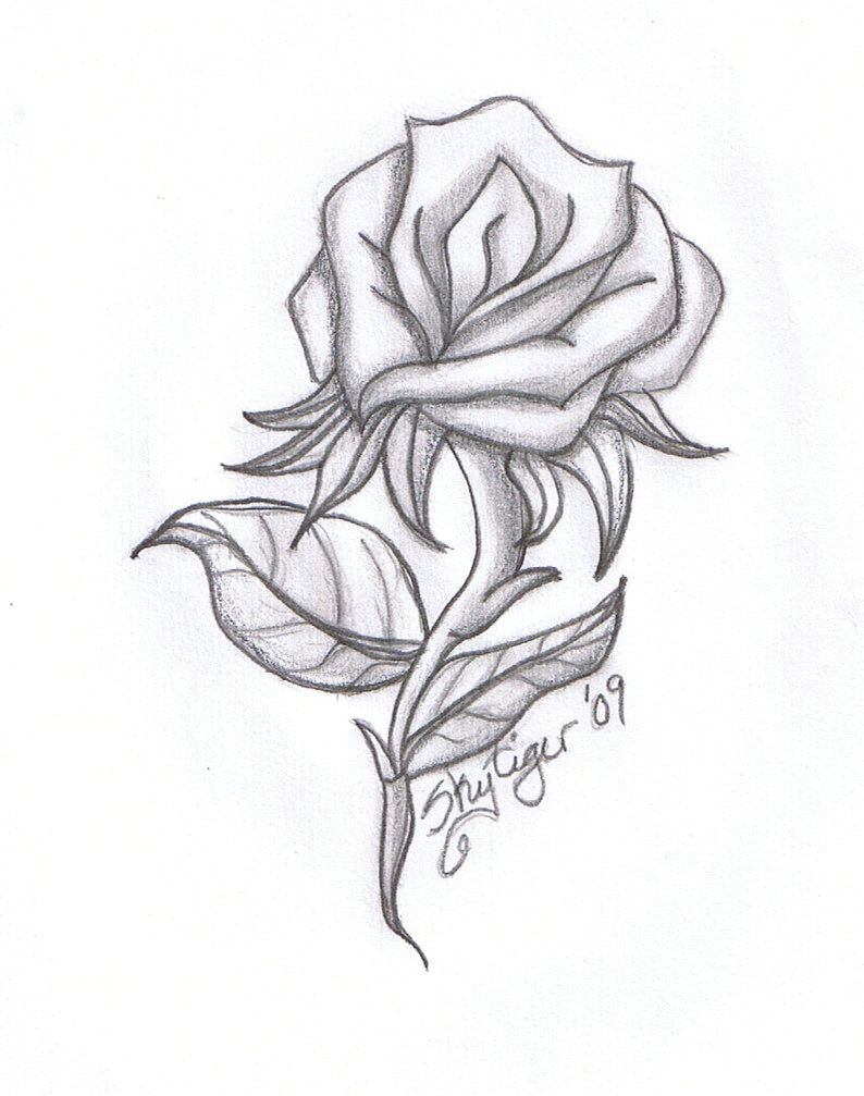 rose drawings rose pencil drawing by skytiger on deviantart
