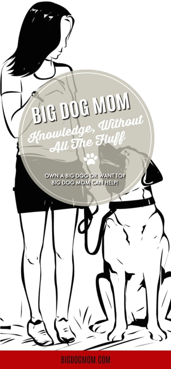 big dog mom is dedicated to large and giant breed dogs by informing and empowering the people who love and care for them join our big dog community today