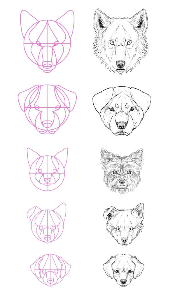 step 13 but what about all the breeds most of them aren t really similar to a wolf well that s not a problem just modify the size of the elements of