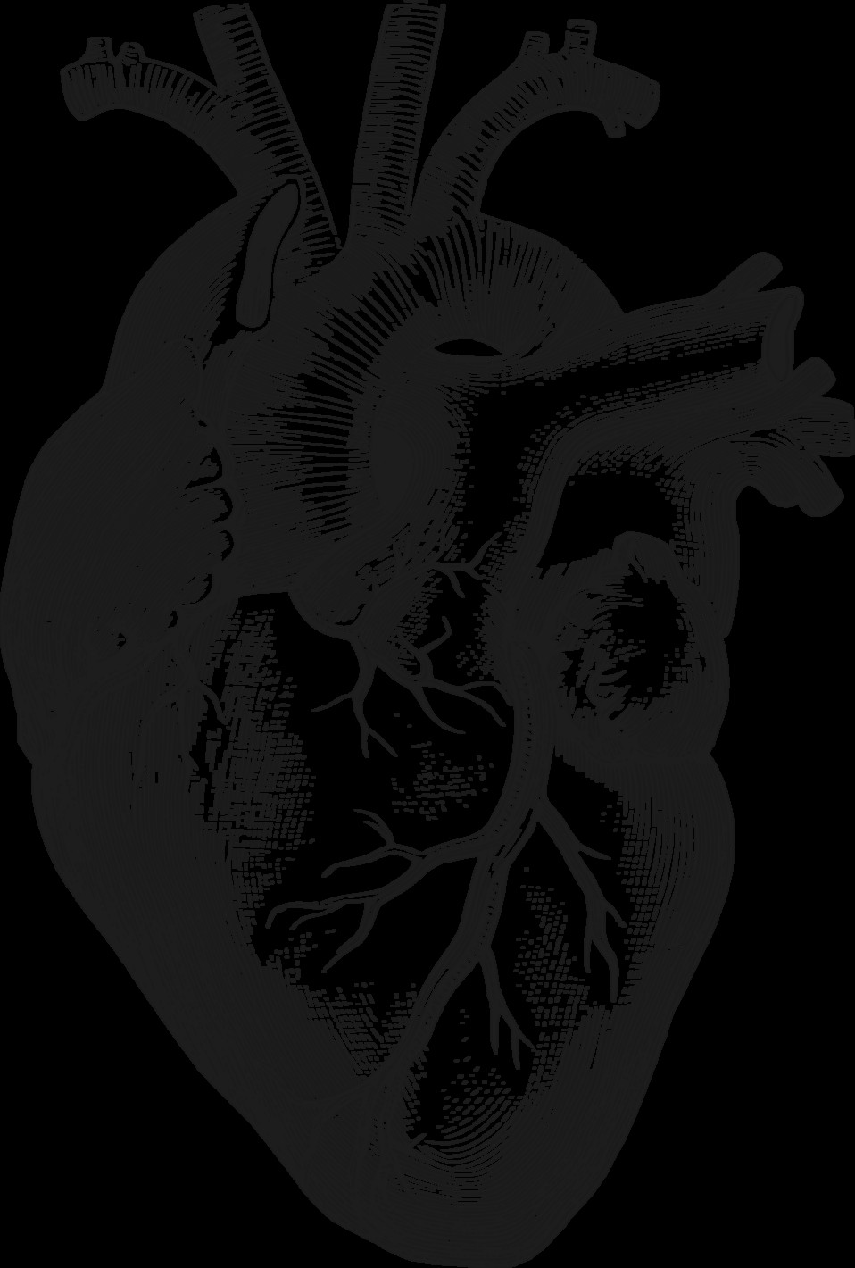 anatomical heart anatomical heart drawing heart images body painting collage body art
