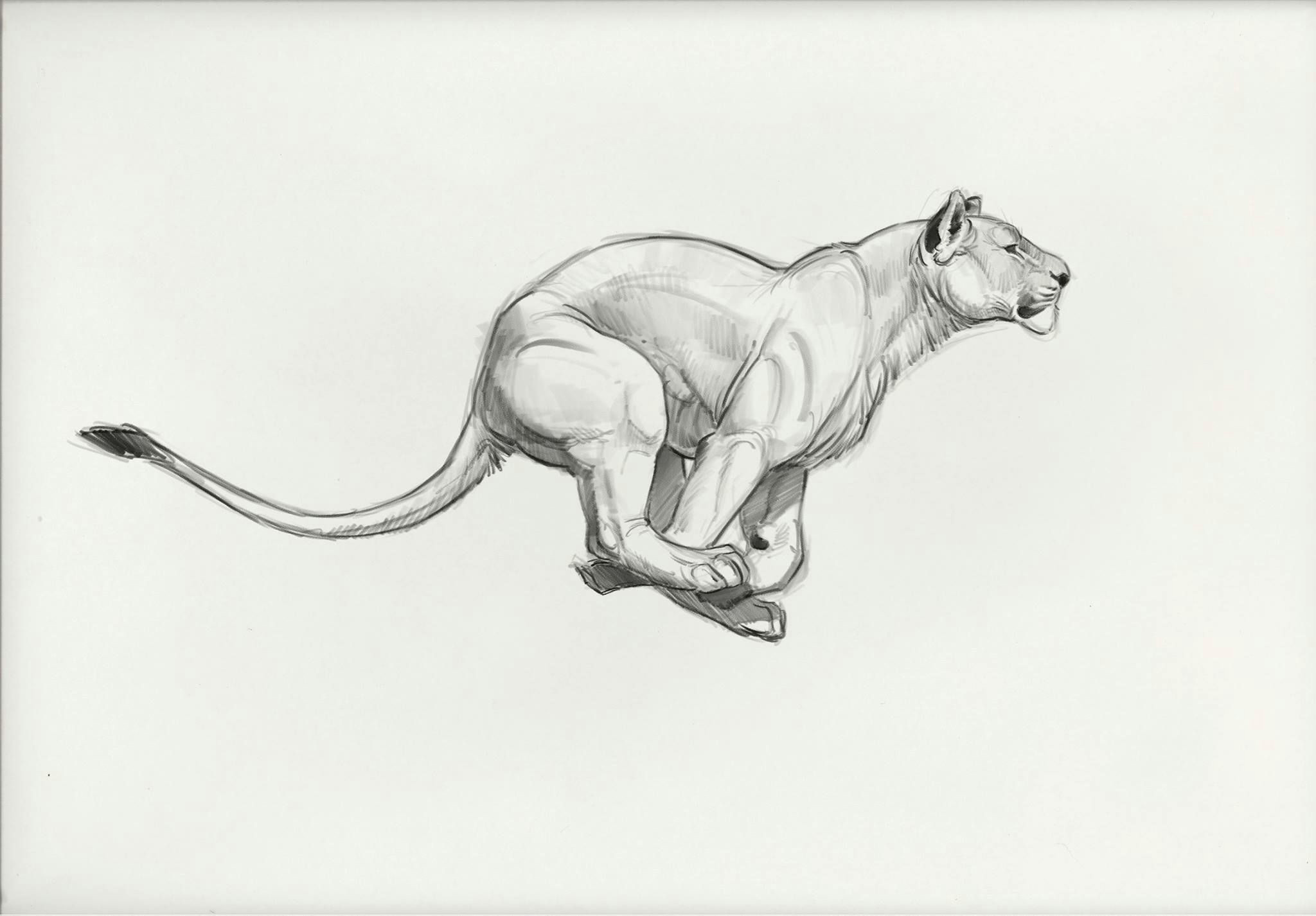 small drawings cartoon drawings animal drawings big cats art