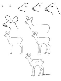 how to draw baby animals step by step learn how to draw a fawn with