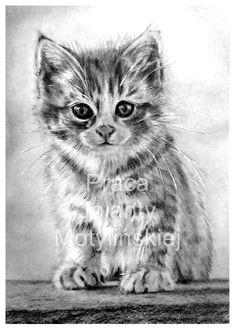 kitten kitten drawingmuseum cafecharcoal