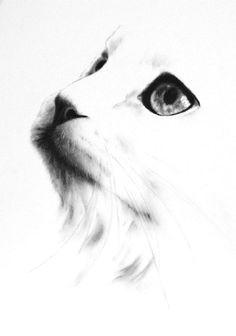 charcoal cat drawing original white cat sketch by jaclynsstudio cat drawing pencil art drawings