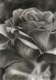 pencil drawings of flowers pencil drawings flowers flower sketch pencil pencil drawings of flowers