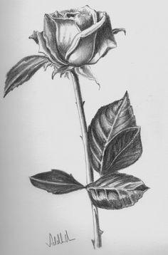 drawing beautiful roses rose drawings rose symbol of love rose wallpapers and quotes beautiful