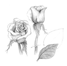 how to draw roses using charcoal charcoal pencil colored pencil marker