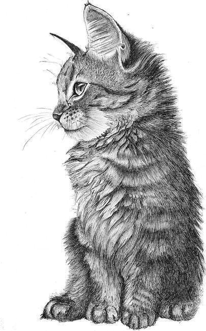 artwork body painting pencil drawings animal drawings pencil art kittens amazing