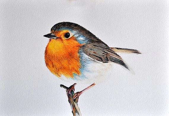 original drawing colored pencil bird illustration cute robin 5 5x8 inch