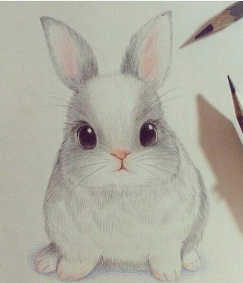 cute drawing and rabbit image