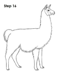 llama drawing 16