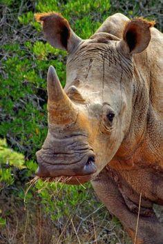 african rhino african animals african safari safari