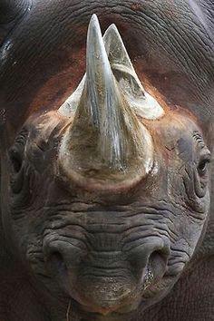 rhino beautiful creatures animals beautiful cute animals large animals baby animals