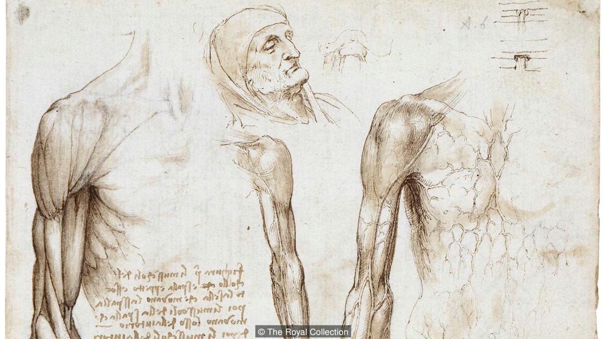 leonardo da vinci studies of hands c 1489 90 214 x 150 mm metalpoint on prepared paper royal collection london