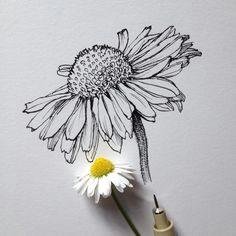 daisy flower drawing flower drawings drawing flowers flower sketch pencil daisy art