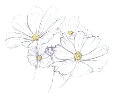 love daisies doodle tattoo tattoo drawings art drawings