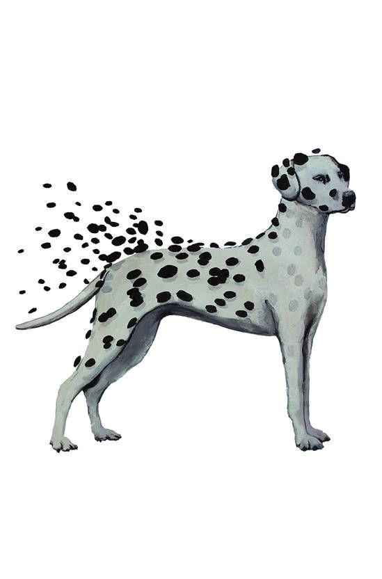 dalmatian print dalmatian drawing dalmatian artwork