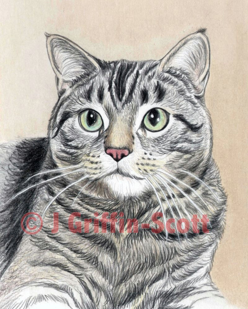 cat portrait 9 56a26d8d3df78cf772758d51 jpg