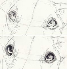 drawing a realistic dogs starts with lifelike eyes eyes get a step by