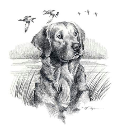 golden retriever dog art print signed by artist dj by k9artgallery