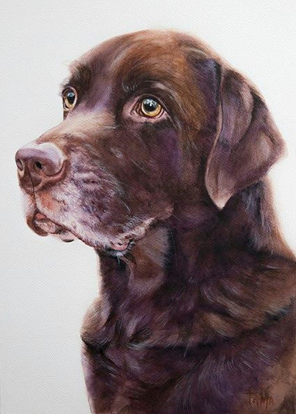 labrador boy watercolor artist tanja kooymans