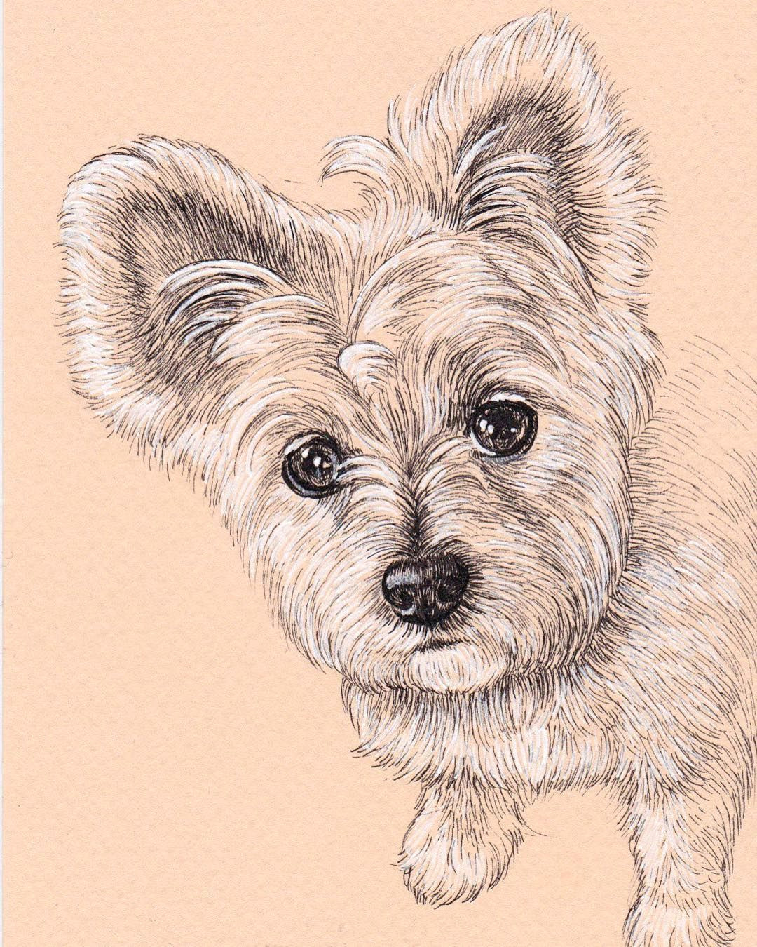 lisa creative lab custom pet portrait from photo dog portrait sketch cat portrait card dog mom gift present ideas fineliner art micron pen