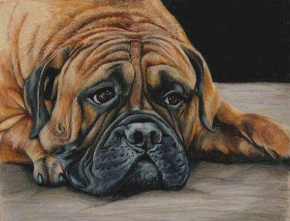 colored pencil bull mastiff dog drawing by portraitsbyaleks etsylove