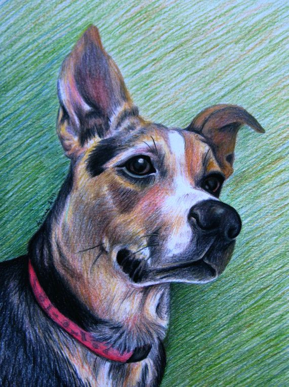 custom colored pencil pet portrait one subject by anniedraper 110 00