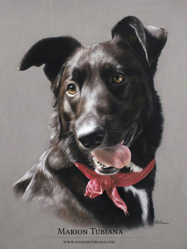 img 8597 copie colored pencil drawing in 2018 pinterest dog paintings dog art and dog portraits