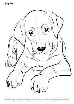 learn how to draw doberman puppy dogs step by step drawing tutorials