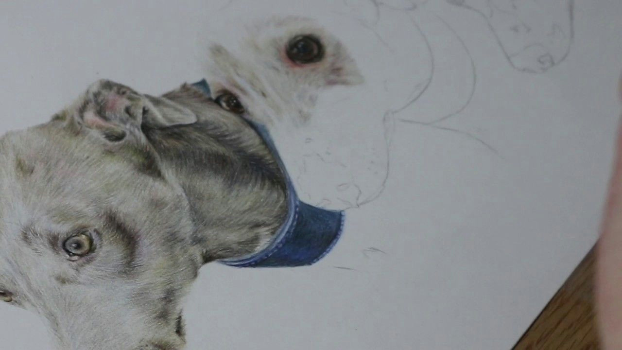 Dog Drawing Time Lapse Time Lapse Whippets Part One Youtube Art Pencil and Charcol