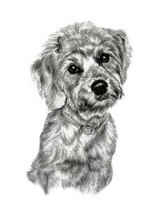 the fluffy little dog sketch 8x10 sketch by pet portrait artsit