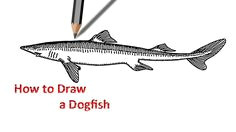 dogfish drawing drawing for beginners fish drawings step by step drawing learn to