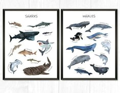 you will get 2 prints one with 10 different sharks and one with 10 different whales all drawn in watercolor basking shark bull shark spiny dogfish