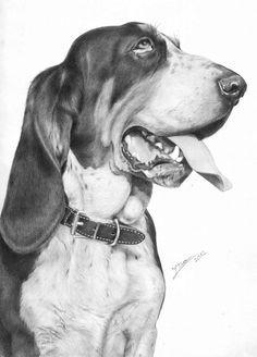 fotorealista rajzok 16 dog barking bassett hound bloodhound dog paintings