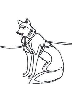 sled husky colouring pintura lead sled husky dog luge