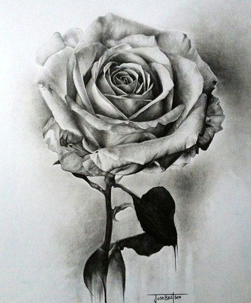 learn to draw a realistic rose drawing on demand
