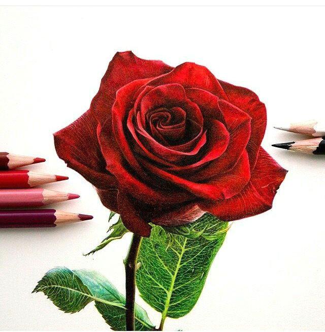 so realistic rose drawing arts pinterest kreativ