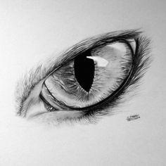 realistic cat eye drawing