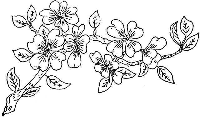 colour it sew it trace it etc 1886 ingalls apple blossom branch flickr photo sharing