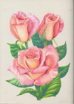 pink roses by 1976kunako deviantart com on deviantart