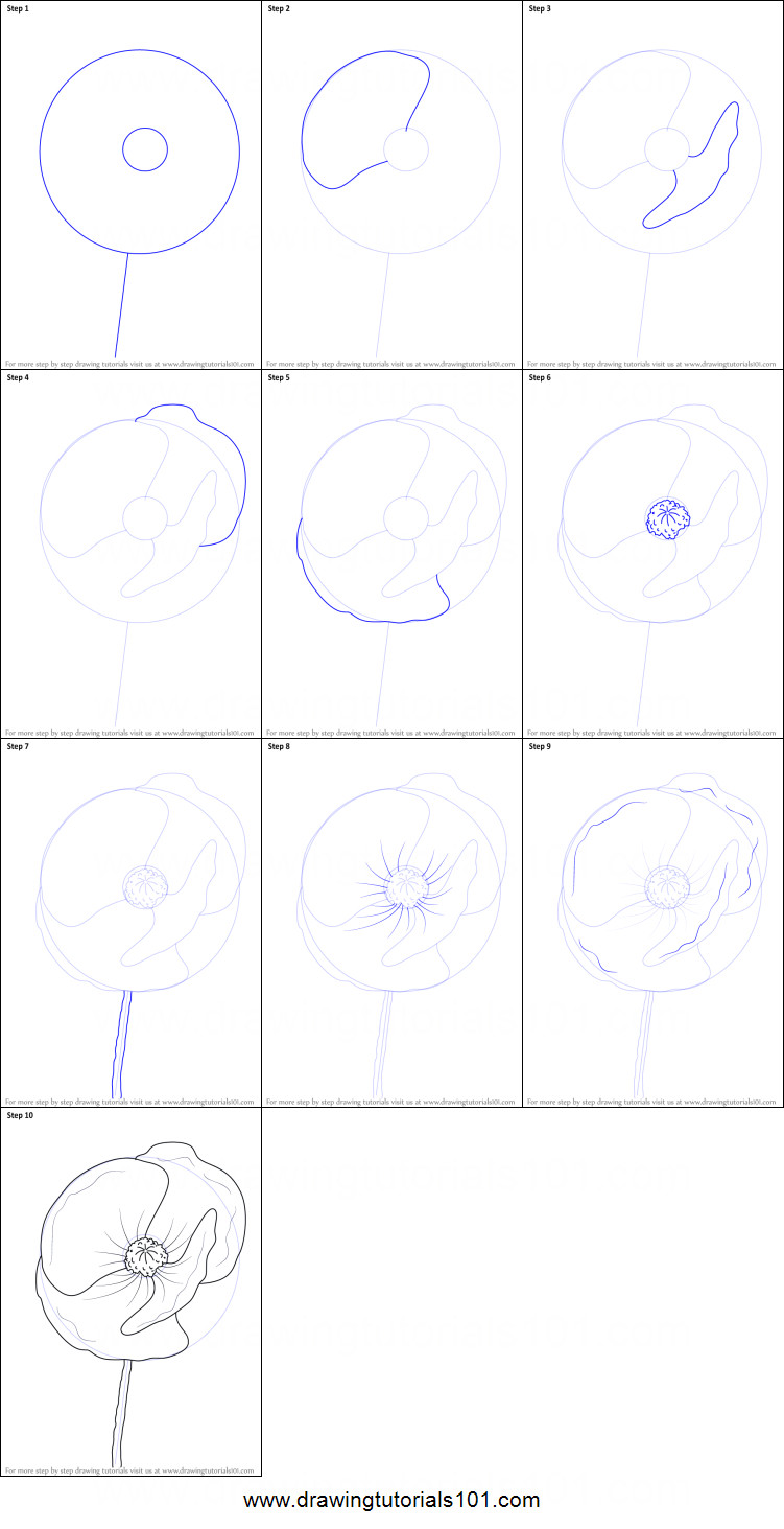 how to draw poppy flower printable drawing sheet by drawingtutorials101 com